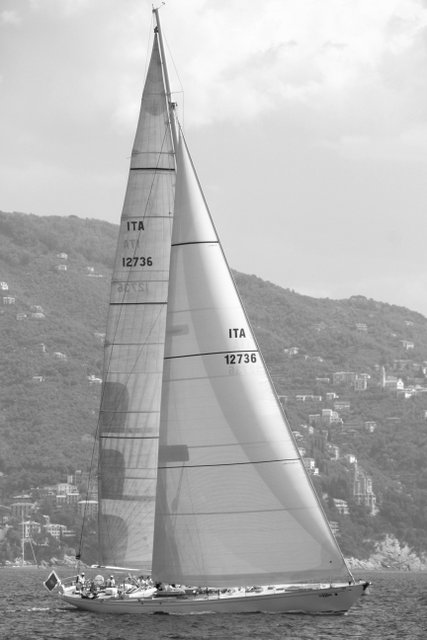 Whitefin in regata 3